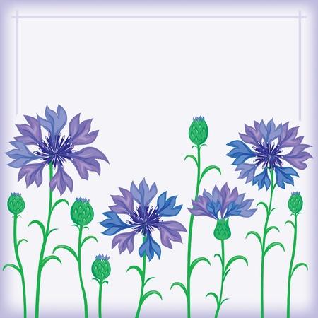 Cornflower: Flower border of cornflowers