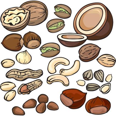 cacahuate: Nueces, conjunto de iconos de semillas Vectores