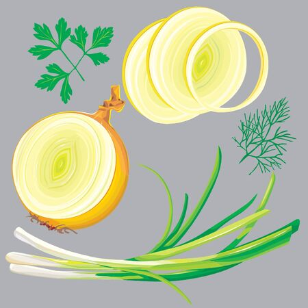 spring onion, parsley, dill, green Stock Vector - 10032761