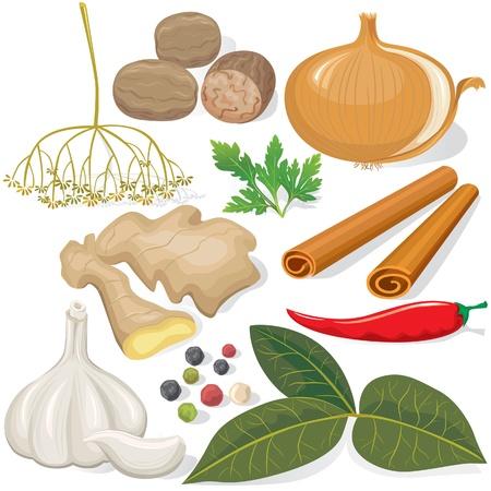cebollas: Especias y verduras para cocinar Vectores