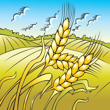 wheat grass: Summer landscape