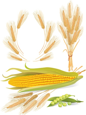 Illustration of cereal, corn, peas, and ears Stock Vector - 14071400