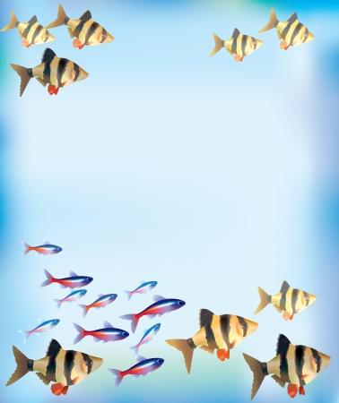 neon fish: Illustration of aquarium fish