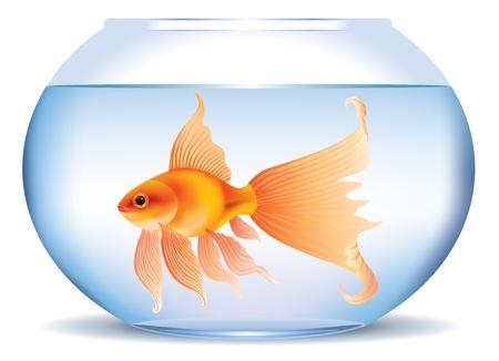fish bowl: Illustration of goldfish in aquarium  Illustration