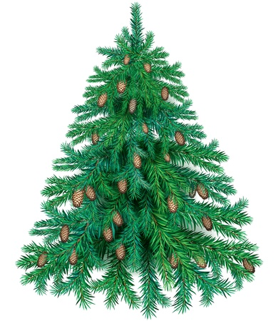 pine cones: Illustration of a beautiful Christmas tree with cones