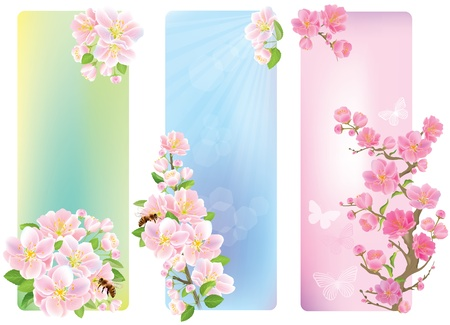 cherry wood: Vertical banners with a blossoming branch  Contains transparent objects