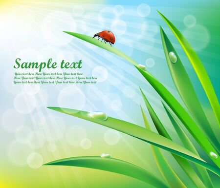 Sunny background with grass  Contains transparent objects  EPS10 Stock Vector - 17473997
