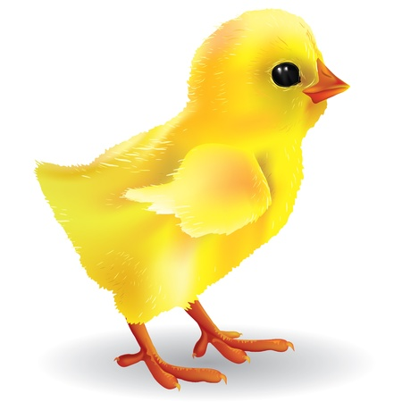 Baby chick. Contains transparent objects