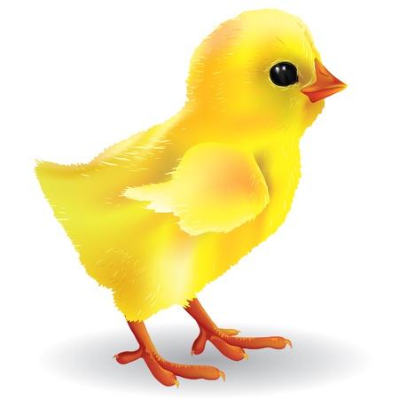 chick: Polluelo del beb�. Contiene los objetos transparentes