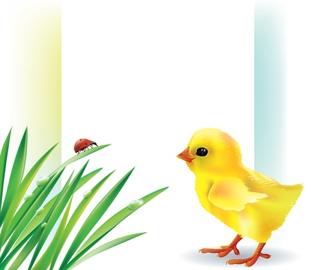 Grass and baby chick background Contains transparent objects Vector