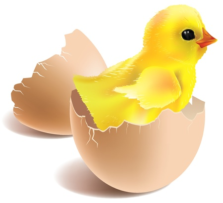 Illustration of baby chick hatched from eggs Contains transparent objects  Vectores