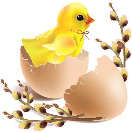 pussy willow: Easter baby chick hatched  Contains transparent objects  Illustration