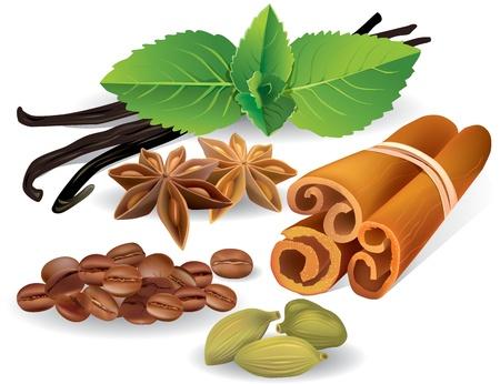 spezie: Aromi naturali e spezie contiene oggetti trasparenti Vettoriali
