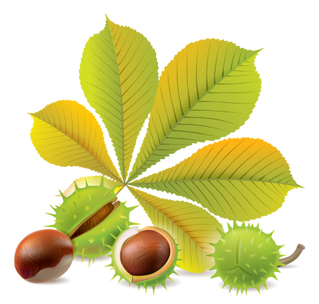 Autumn chestnuts. Chestnuts  Vector