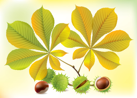 Autumn chestnuts and leaves.   Vector