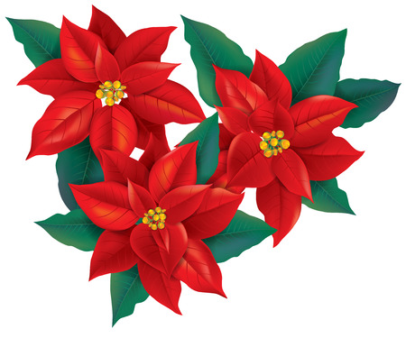 poinsettia: Red Poinsettia christmas flower. Contains transparent objects. EPS10