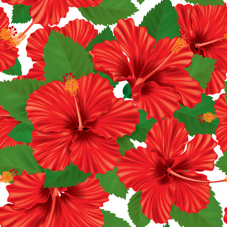 Seamless pattern of hibiscus. Contains transparent objects. EPS10 Vector