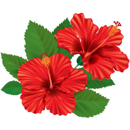 ハイビスカスの花。透明なオブジェクトが含まれています。EPS10