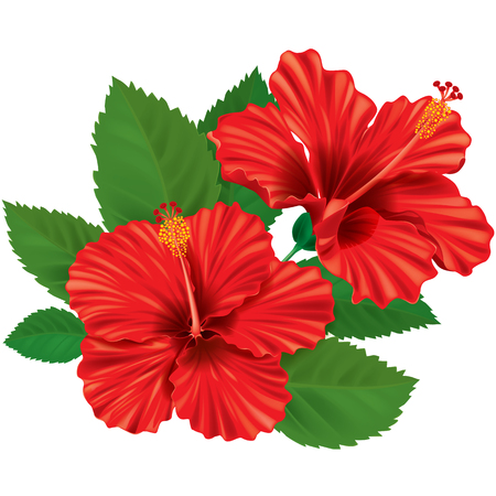 Hibiscus flower. Contains transparent objects. EPS10  Иллюстрация
