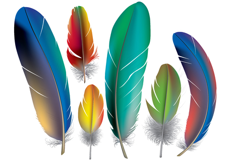 zero gravity: Colored feathers. Contains transparent objects.  Illustration