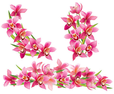 Garland of orchids. Contains transparent objects. EPS10 Vector