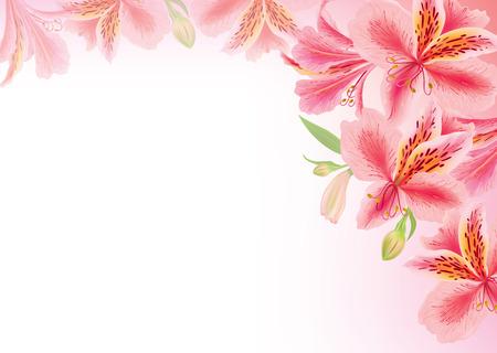 alstroemeria: Background alstroemeria flower
