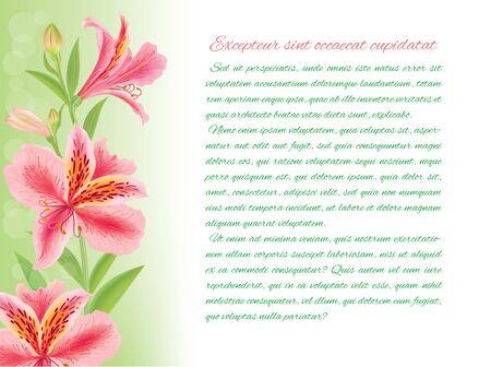 alstroemeria: Alstroemeria horizontal background with text
