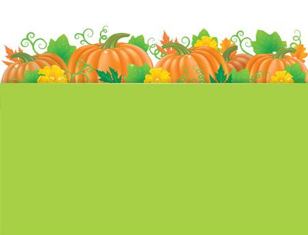 fruit stem: Colored banner with Pumpkins. Eps10 Illustration