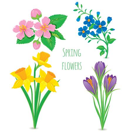 fruit stem: set of beautiful spring flowers Illustration