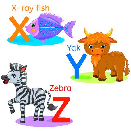 xyz: XYZ alphabet wildlife: x-ray fish; yak, zebra.