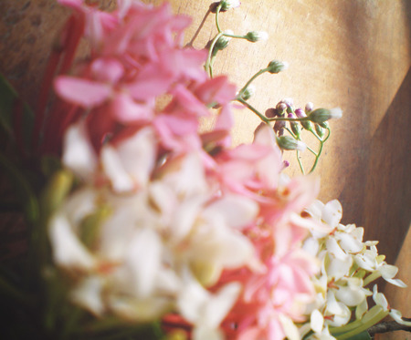 Vintage blur white and pink Jasmine with bamboo in pink light and shadow