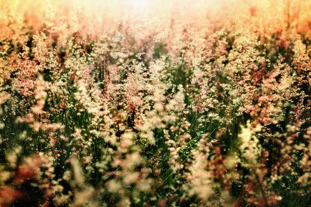 warmth: warmth soft prairie