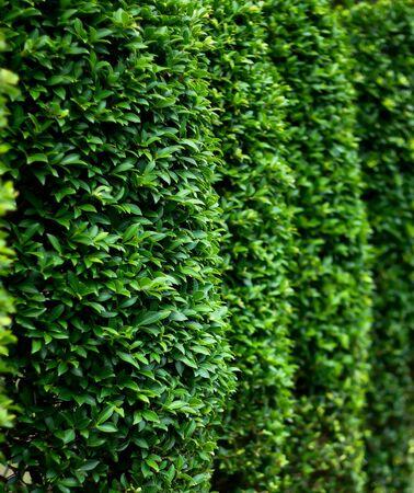 close up Side of green bush  photo