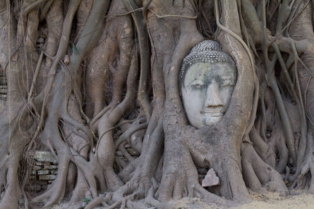 Stone budda head covered by the tree roots at Wat Mahathat, Ayutthaya, Thailand  photo