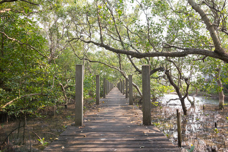 rosy cheeked: bridge in mangrove forest