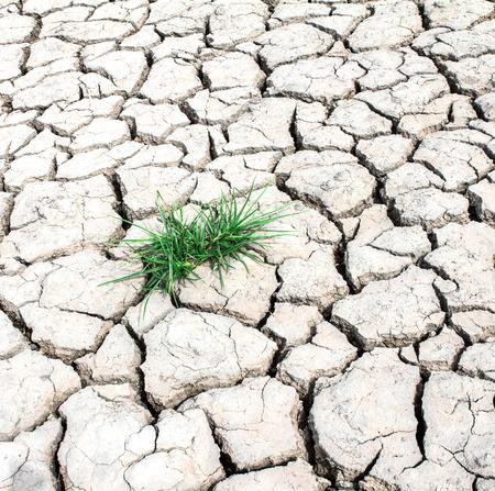 grass growth through out dried cracked mud  Zdjęcie Seryjne