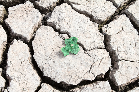 pflanze wachstum: Pflanzenwachstum durch aus getrockneten gebrochenen Schlammes