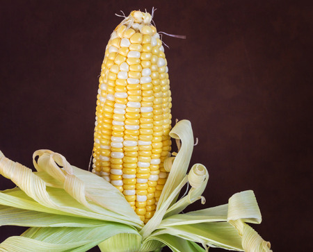 two tone: two tone of sweet Corn on dark brown background Stock Photo