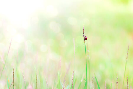 Abstract nature background of grass and ladybug photo