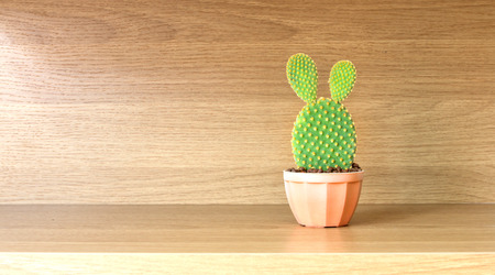 microdasys: Opuntia cactus in brown pot on wooden shelf Stock Photo