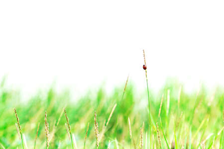 Abstract nature background of grass and lady bug