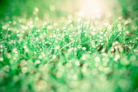 grass with droplets and beauty bokeh background photo