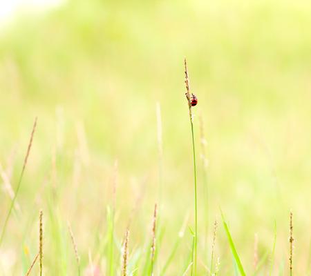 Abstrakte Natur Hintergrund von Gras und Marienkäfer Standard-Bild - 33719461