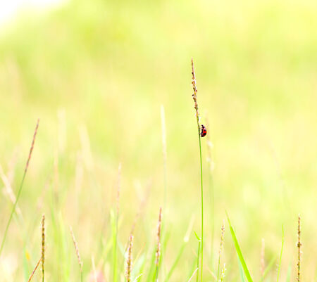 Abstract nature background of grass and ladybug
