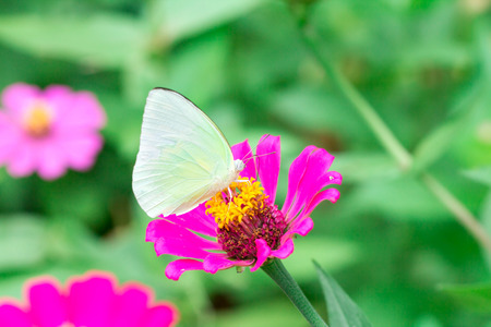 butterfly on pink flower in the garden on sunny day Imagens
