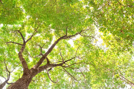 under the tree: under tree branch with green leaf view Stock Photo