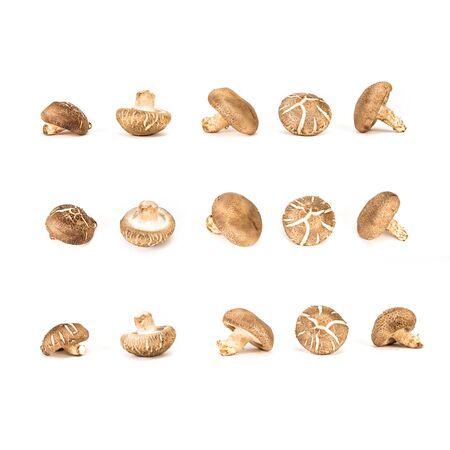 The Chinese mushroom on white background