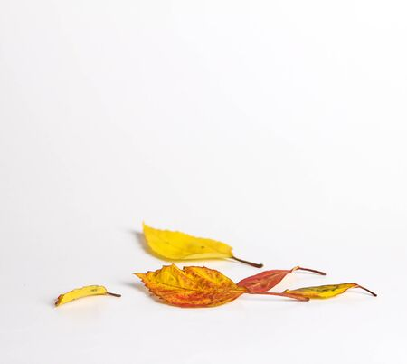 autumn leaves falling: dried autumn leaves falling down on white floor , selective focus Stock Photo