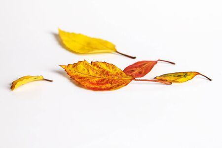 dried autumn leaves falling down on white floor , selective focus Stock Photo