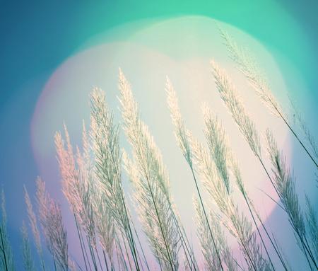 softness: abstract retro green lighting softness Feather Grass background